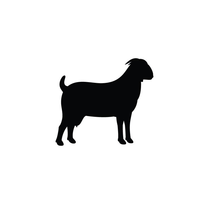 Goat Serum