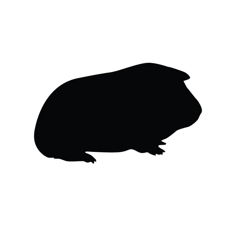 Guinea Pig Serum