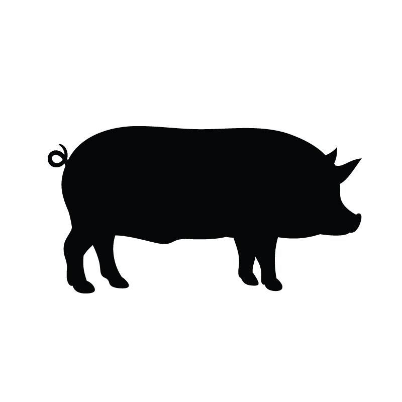 Pig Serum
