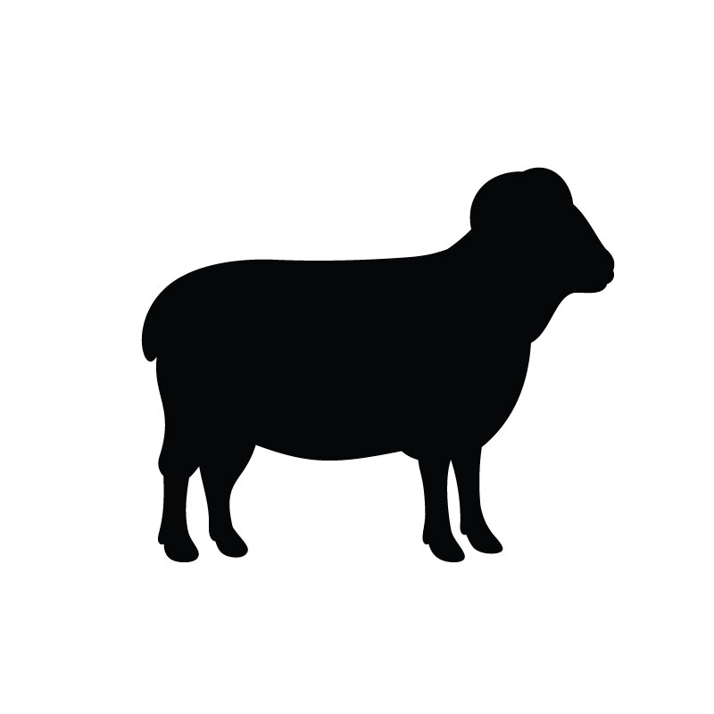 Sheep Serum